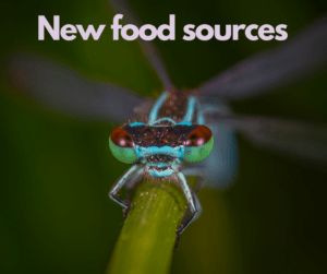 New Food Sources – AIRC341