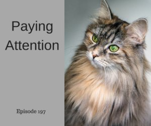 Paying Attention – AIRC197