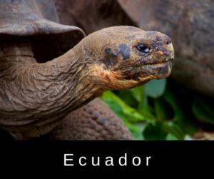 Ecuador – AIRC254